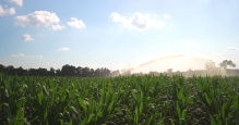 EPIC_Cornfield_Irrigation